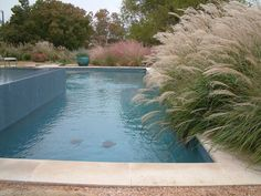 Miscanthus 'Adagio', Switch Gras