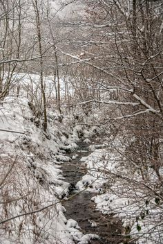 Check out Stream winter by ChristianThür Photography on Creative Market Winter Time, Nature Photos, Photoshoot, Marketing, Creative, Check, Pictures, Photography, Outdoor