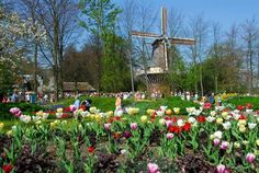 When you are visiting The Netherlands in Spring you must visit the Keukenhof in Lisse. This world famous flowergarden is the place to see the beautifull tulips.