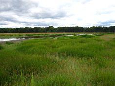 Muddy Creek bank (Wetland Mitigation)