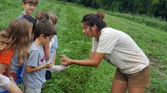 Campers learn how to find potato beetles