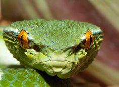 Fort Worth Zoo, Pets, Google, Image, Animals, Animales, Animaux, Animal, Animais