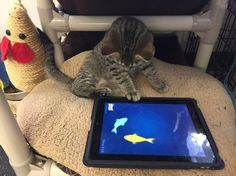 "The Humane Society in Canada Just Started Its ""iPads for Cats"" Program So Kitties Can Hunt and Play - Cheezburger"