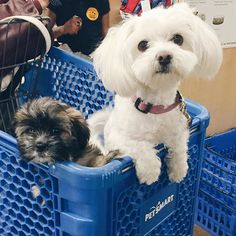 Nothing makes your pet happier than going with you on a PetSmart run! (Photo Credit: joanamxo)