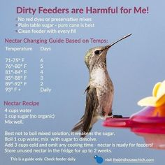 Easiest Nectar Recipe - no cooling time! Get ready for tiny sprites and vow to make your own nectar this year. Keep hummingbirds safe & healthy with fresh nectar! #hummingbirds #hummingbirdfeeders #hummingbirdnectar #diynectarfeeder #WildBirdScoop