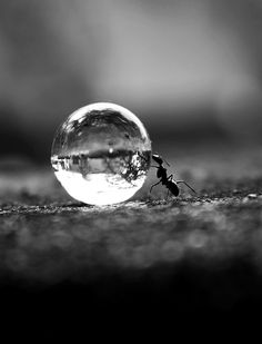 ant water drop micro photography