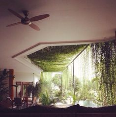 Love the green plants hanging from the ceiling and down the windows!
