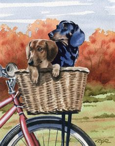 Unique Dachshund fine art from the studio of artist David J Rogers. Gallery quality fine art at studio direct prices! The perfect gift for the Dachshund lover! Arte Dachshund, Dachshund Love, Daschund, Biking With Dog, Dog Paintings, Scottish Terrier, Dog Art, Cute Dogs, Cute Animals