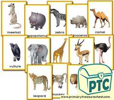 African Animal themed resources for the classroom Safari Theme, Jungle Safari, Safari Animals, African Elephant, African Animals, African Safari, Pictures Of Zoo Animals, Classroom Banner, Display Banners