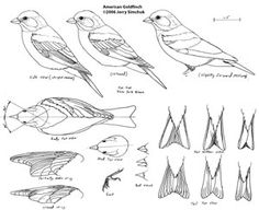 Bird Patterns For Wood Carving                                                                                                                                                                                 More