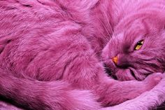 Wow how I'd love a pink kitty!! :)