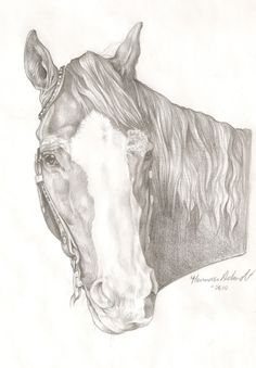 4937 Best Horse Drawings Images On Pinterest Drawings Of Horses
