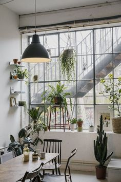 There's always room for some hanging plants don't you think?