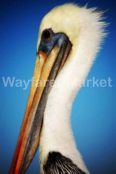 Pelican by Mandy Solomon 8x10 Print by WayfarerMarket on Etsy, $20.00