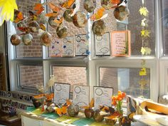 Documentation of our learning. We layered the children's work in a display that captured not only the growth and change of the caterpillars but of our own learning and understanding. Butterfly Inquiry