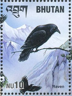 Northern Raven stamps - mainly images - gallery format