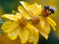 'Bee highway' created in Oslo to give pollinators safe passage through the city6/26/15 The Independent