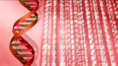 Ieder mens heeft DNA. Dat is een unieke code die in ons lichaam zit. Het bepaalt…