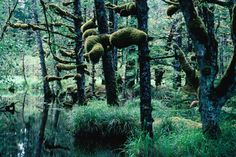 Looks like something out of of Nausicaa // Naikoon Rainforest, Queen Charlotte Islands (Haida Gwaii), British Columbia, Canada The Places Youll Go, Great Places, Places To See, Beautiful Places, British Columbia, Rocky Mountains, Alaska, Vancouver, Haida Gwaii