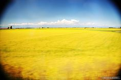 Somewhere in Northern Italy via BeersandBeans.com >> I so want to be running through this field... in slow motion!