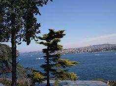 Мой грушевый сад                                                                                                                                        И вид со смотровой площадки дворца на Босфор и на азиатскую часть города.