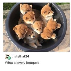Cute shiba babes Tags - #textpost #textpost #tumblr #tumblrfunny #funny #lol #tumblrpost #tumblrtextpost #instagram #relatable #relatableposts #nofilter #tumblrquotes #funnytext #fashion #followme #f4f #followforfollow #tumblrtexts #meme