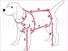 одежда для собак - Пошук Google