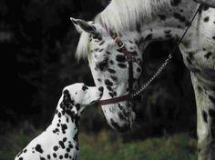 Cão e cavalo