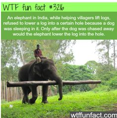 WTF Facts : follow for more funny, interesting & weird facts 😉