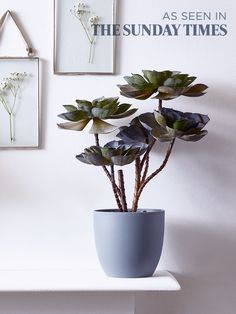 Potted in a simple and smooth grey pot filled with smooth black pebbles, our impressive Echeveria plant looks so realistic you'll find it hard to believe it's not. This tabletop purple-green succulent adds a fresh botanical feel to your home all year around without the hassle of maintaining a real plant. As seen in The Sunday Times.