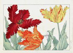 Parrot Tulips. Tanigami Konan Western Flower Woodblock Prints 1917 #flowers #gardens #japanese #woodblockprint #antiqueprint