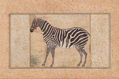 """Attributed to Mansur """"Zebra."""" Museum of Fine Arts, Boston. Animal Drawings, Art Drawings, Mughal Miniature Paintings, Year Of The Horse, Web Gallery, Medieval Manuscript, Indian Paintings, Museum Of Fine Arts, Horse Art"""