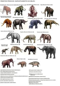A chart of all the major extinct elephant family members.