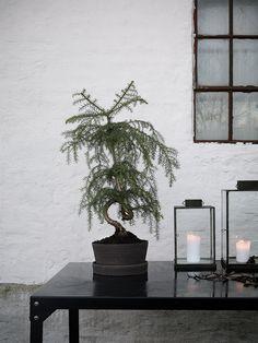 Handmade Ceramic pot by Witte & Braf | Photo: Daniella Witte