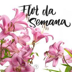 Explicações sobre o lírio na Flor da Semana, com suas caraterísticas e dicas de como cuidar desta flor que adoramos em nossas decorações.