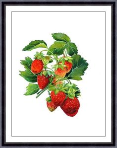 Watercolor Painting - Strawberry Painting - Watercolor Strawberry - 5x7 or 8x10 Print - Archival Art Print 38, Home Decor, Fruit Art