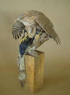 Wood Carving: By Richard Finch, Love the prey the hawk has caught
