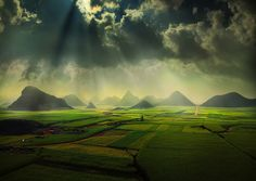 The canola fields by Weerapong Chaipuck.