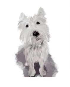 'Bit disappointing', fine art print by Meg Anderson. A westie terrier, telling it like it is. Click through for details. Whimsical Art, Westies, Dog Art, Fine Art Paper, Giclee Print, Fine Art Prints, Terrier, Artist, Dogs