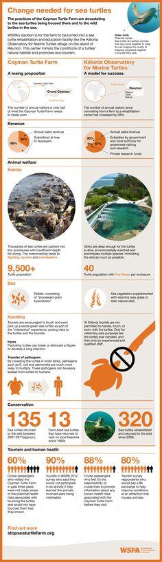 Change needed for sea turtles #WorldSeaTurtleDay #Infographic