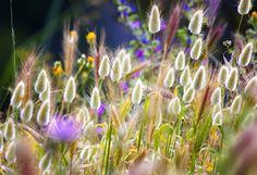 природа, весна, трава, макро