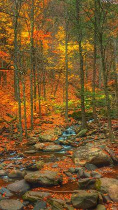 fall scenery ~~ Goldener Wald ~ Herbst in Kaaterskill, Catskill, New York von Victor Utama ~~ - Robin Evans Studio - Image Nature, All Nature, Autumn Nature, Autumn Rain, Autumn Forest, Amazing Nature, Beautiful World, Beautiful Places, Beautiful Pictures