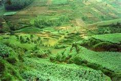 Indonesia , rice terraces!