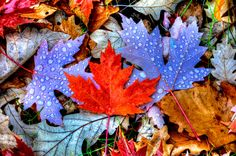 Colorful Leaves - Photography & Abstract Background Wallpapers on . Fall Wallpaper, Nature Wallpaper, Wallpaper Backgrounds, Leaves Wallpaper, Wallpapers, Leaf Photography, Autumn Photography, Autumn Scenery, Fall Pictures