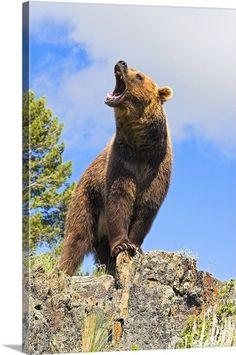https://www.google.com/search?q=happy bear