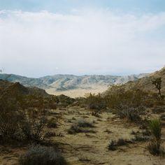 Joshua Tree National Park, A. Beaney.