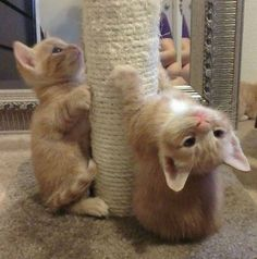 Kittens doing their daily workout!                                                                                                                                                                                 More