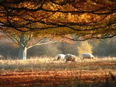 Autumn in the New Forest    Google Image Result for http://classictravelling.com/wp-content/uploads/UK/autumn.jpg