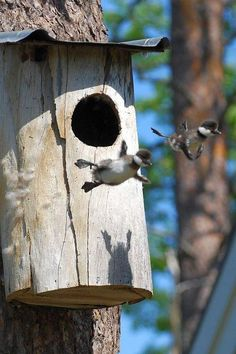 First flight out of the birdhouse :)