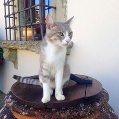 Discover the animals of Villa Campestri! http://ow.ly/AAoK303sCr9